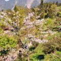 沼平公園-賞櫻最佳地點之一照片