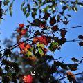 祝山觀日樓(祝山觀日平台)-楓紅照片