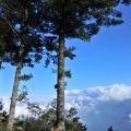 祝山觀日樓(祝山觀日平台)-松樹雲海1照片