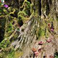 慈雲寺-枯木苔蘚照片