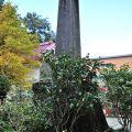 慈雲寺-古石碑2照片