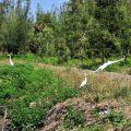 鰲鼓溼地-隨處可見白鷺鷥與各種候鳥照片
