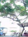 大樹下 切仔麵 小吃店 -大樹下 切仔麵 小吃店 照片