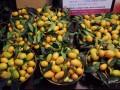 蘭香坊-金棗照片