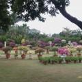 林家園藝照片