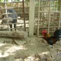 大坑休閒農場-大坑休閒農場照片