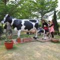 乳牛的家(營長牧場,八老爺車站)-乳牛的家(營長牧場,八老爺車站)照片