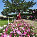獨角仙休閒農場-花團錦簇照片