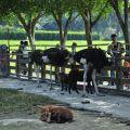 獨角仙休閒農場-駝鳥餵食區2照片
