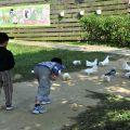 獨角仙休閒農場-孔雀鴿餵食區照片