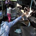 獨角仙休閒農場-小牛ㄋㄟㄋㄟ餵食區照片