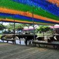 獨角仙休閒農場-騎馬體驗區照片