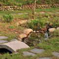 雲科生態休閒農場-農場生態池照片