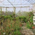 雲科生態休閒農場-在這個溫室裡有許多的蝴蝶漫天飛舞照片