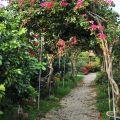 雲科生態休閒農場-浪漫的步道照片