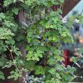 雲科生態休閒農場-農場內種植的植物照片
