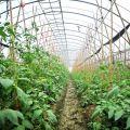 永豐農場-永豐農場照片