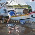 嵵裡沙灘轉角1-6-嵵裡漁港卸魚獲照片