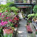 四季春曉庭園餐廳(已結束營業)-一樓園藝區照片