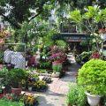 四季春曉庭園餐廳(已結束營業)-一樓園藝區4照片