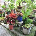四季春曉庭園餐廳(已結束營業)-一樓園藝區5照片