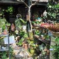 四季春曉庭園餐廳(已結束營業)-一樓園藝區2照片