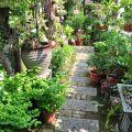 四季春曉庭園餐廳(已結束營業)-一樓園藝區3照片