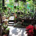 四季春曉庭園餐廳(已結束營業)-一樓園藝區6照片