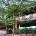 東香貓咖啡園-東香貓咖啡園照片