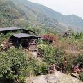 麗京山莊-麗京山莊照片