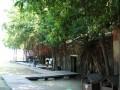 台南 - 安平樹屋照片