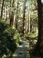 宜蘭 - 太平山茂興懷舊步道照片
