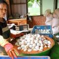 台南鴨莊休閒農場-台南鴨莊休閒農場照片