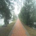 清遠湖濕地照片