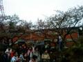 台灣有個阿里山照片