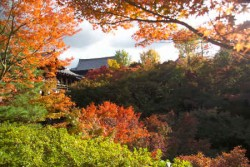 京都11月賞楓主照片