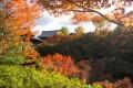 京都11月賞楓照片