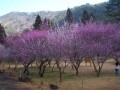 武陵農場照片